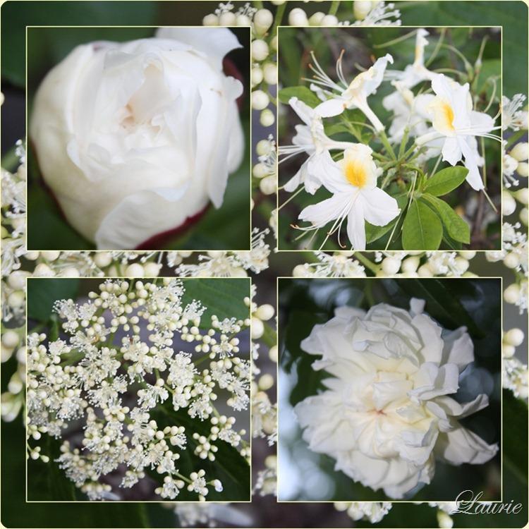 white flowr mos