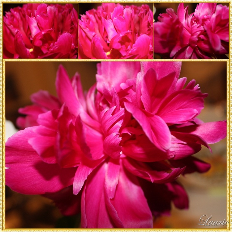 pink peony mos