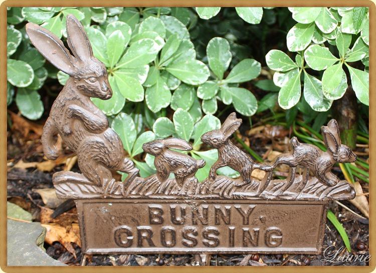 bunny xng
