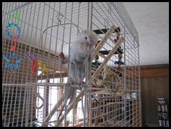 birds 028