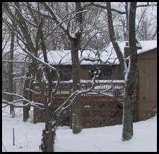 snow! 15feb 003