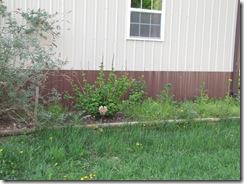 WIP& Garden 022