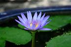 Une fleur que je trouvais jolie...