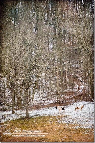 Winter Drive-5