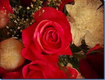 Rose textured