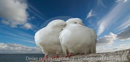 wihte-doves-in-love-thumb1051215