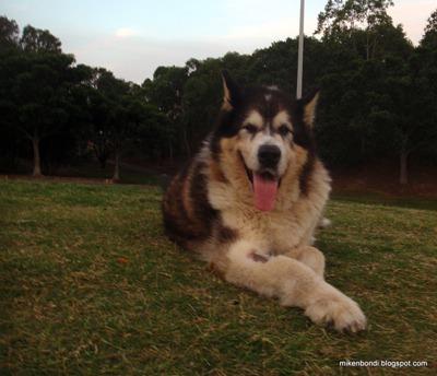 Bondi's last visit to Sydney Park