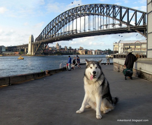 Munson by Sydney Harbour Bridge