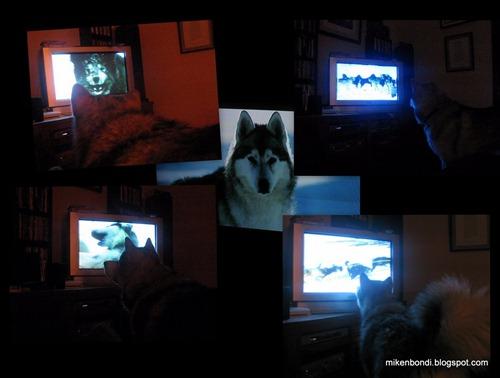 20090529 Munson watching Antarctica
