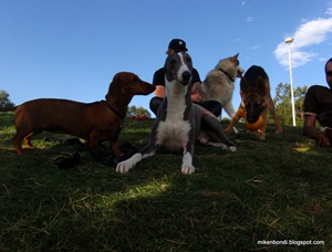 Dackel Chips, Pierre, Munson & Wilma