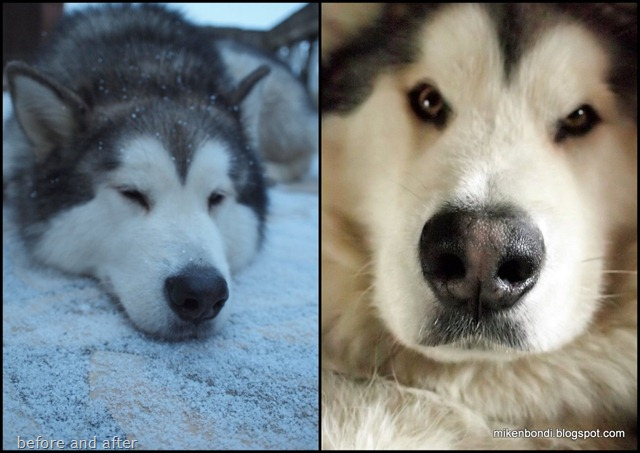 Snow nose: before and after
