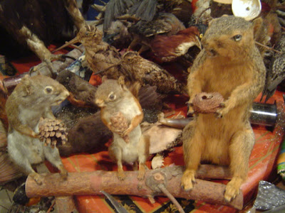 image of squirrels stuffed and mounted