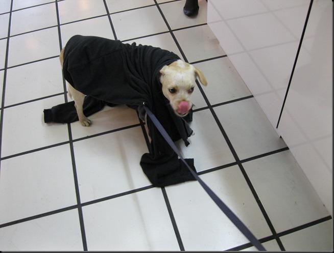 dogworktattoo 017