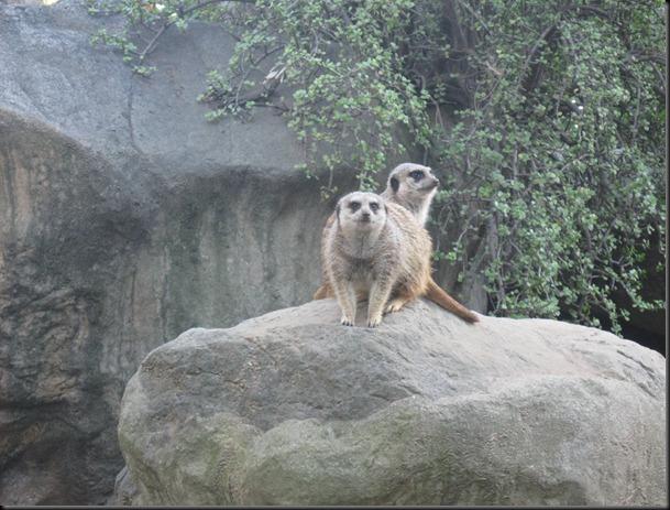 zoo! 002