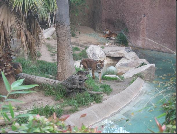 zoo! 012
