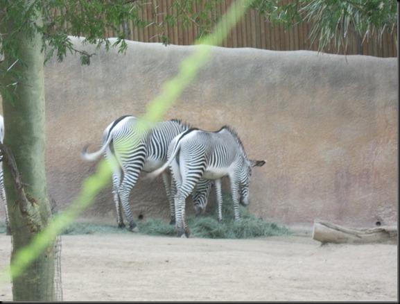 zoo! 046