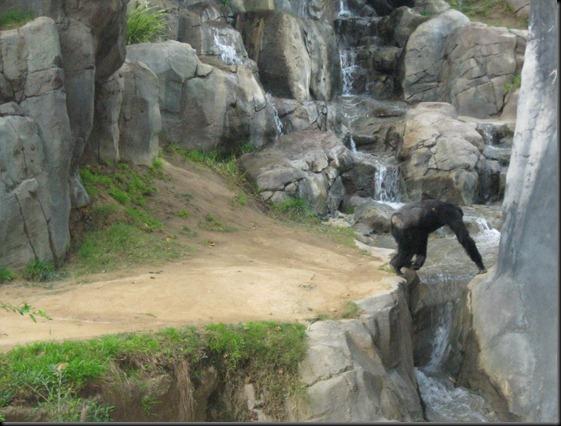 zoo! 087