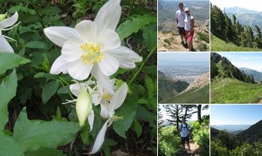 View Ben Lomond Hike