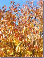 autunno3