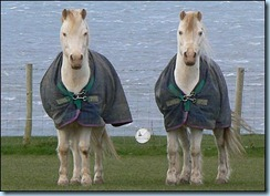 _42876235_horse5