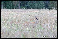 Bambi på tur