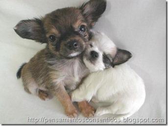 1220463818_puppies-30