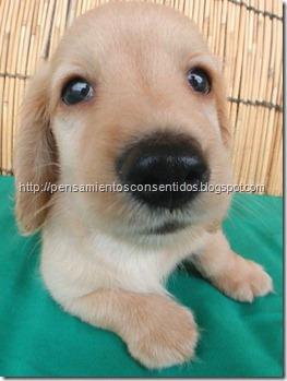 1220463820_puppies-05
