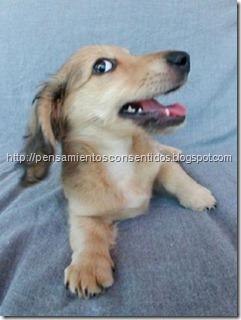 1220463833_puppies-42