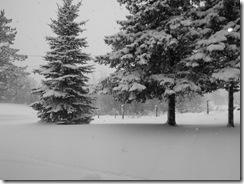 Christmas 2010 060