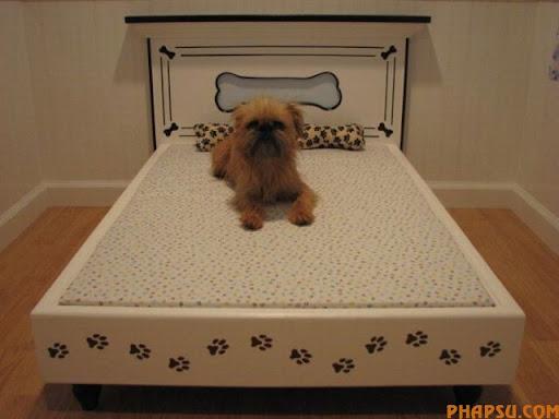 dog_houses_22.jpg