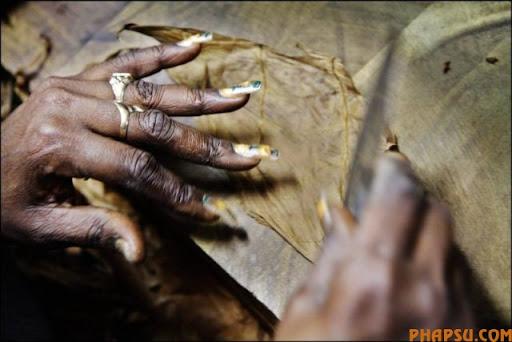 cuban_cigars_cohiba_01.jpg