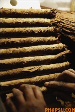 cuban_cigars_cohiba_07.jpg