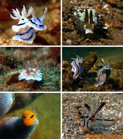 amazing_sea_slugs_640_28.jpg