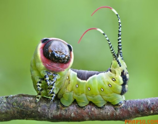 beautiful_caterpillars_12.jpg