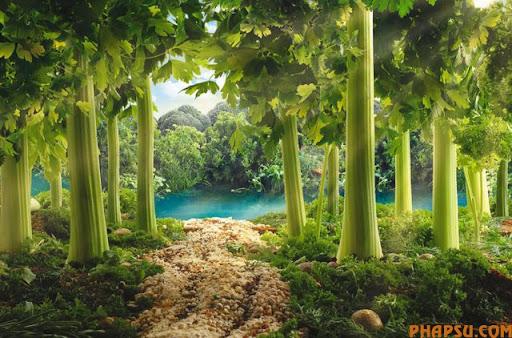 food_landscapes_007.jpg