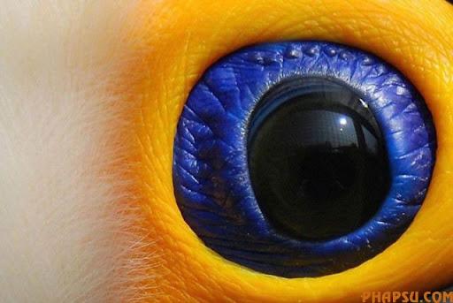 animal_eyes_640_03.jpg
