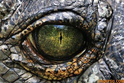 animal_eyes_640_10.jpg