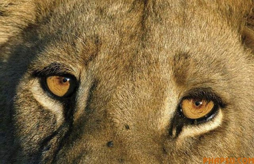 animal_eyes_640_14.jpg