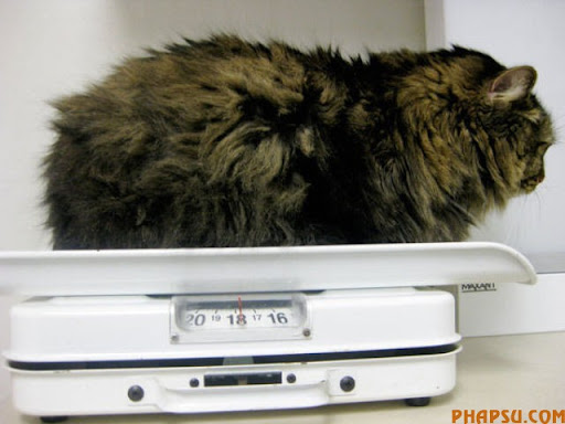 fatty_cats_640_02.jpg
