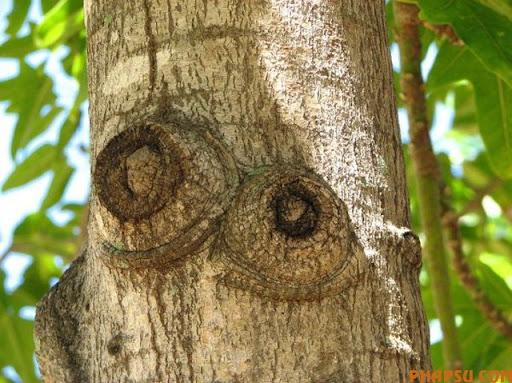 tree_30.jpg
