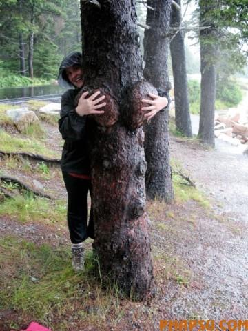 tree_02.jpg
