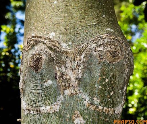 tree_18.jpg