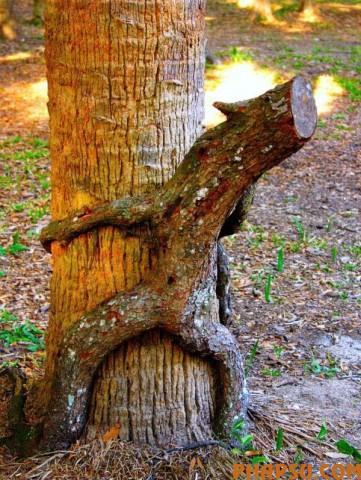 tree_21.jpg