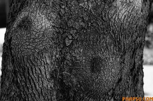 tree_23.jpg
