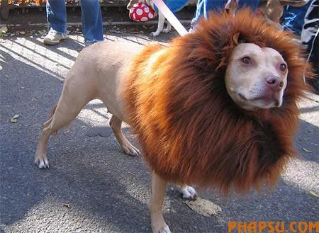 a97115_g079-15-lion2.jpg