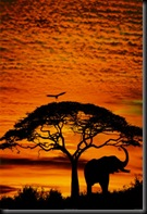 I-36047~African-Skies-Posters