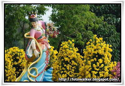 圓玄學院2009菊花展(Chrysanthemum Show 2009 at The Yuen Yuen Institute)