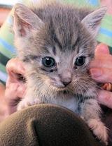 Kitten3_Gumdrop