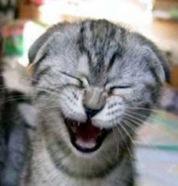 gato rindo