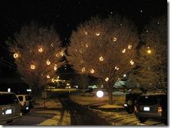 Shining trees on Miller St.